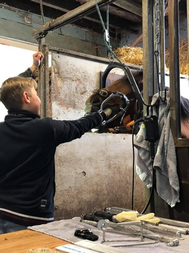 Klant voelt de tanden en kiezen van het paard Na een gebitsbehandeling door Xander Tuitjer.
